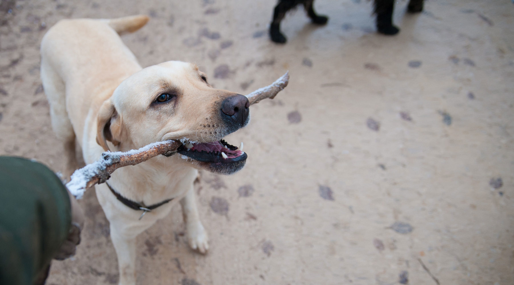 Dog Friendly Breaks In Cornwall The Alverton Hotel Truro