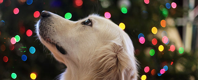 big-doggy-day-out-christmas-festival-royal-cornwall-showground-wadebridge-things-to-do-in-November-the-alverton-truro